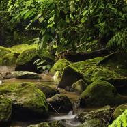 Rainforest Cascades Discovery