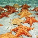 Starfish Snorkel & Beach Break
